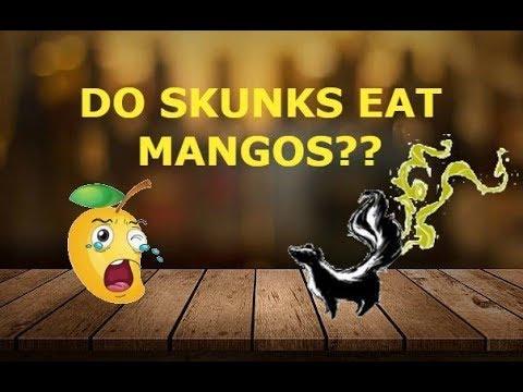 DO SKUNKS EAT MANGOS????