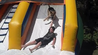 Dogs Playing on Water Slides Compilation