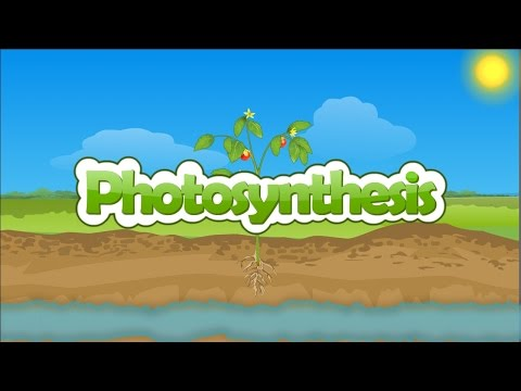 Photosynthesis | How plants make food | Photosynthesis in plants