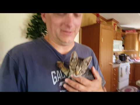 Sick Stray Kitten Needs to See the Vet