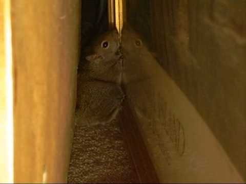 Baby Squirrel Caught Running Loose in My House