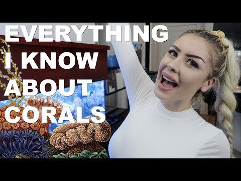 Corals are ALIVE?! (Coral Facts in Less Than 20 Minutes)