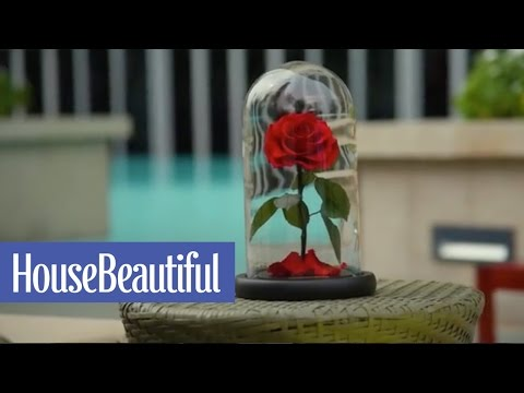 These Real Enchanted Roses Will Last 3 Magical Years | House Beautiful