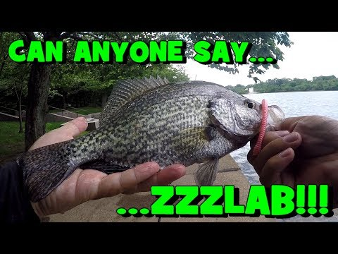 Gamefish Fishing in Washington D.C.!!! BONUS FOOTAGE -- #2