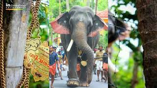 Travancore Devaswom Board Officials Feeding An Elephant At The Launch Of Annual Rejuvenation Therapy For
