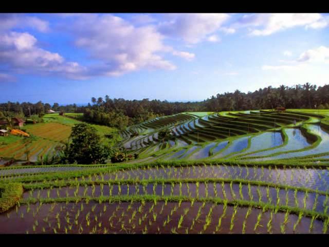 GIGI - Indonesia