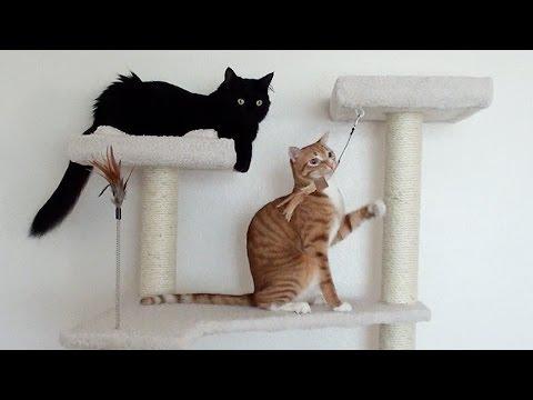 2 Cats, 1 Cat Tree!