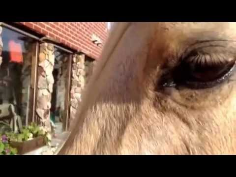 How to treat a horses swollen eye.