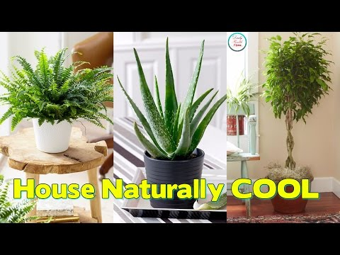 Turn Off Your Aircon  5 Plants to Keep Your House Naturally COOL
