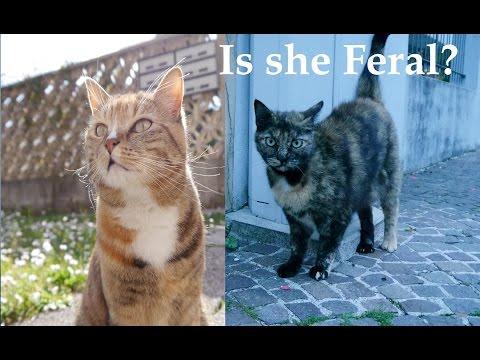 Outdoor pet cats Vs Feral cats