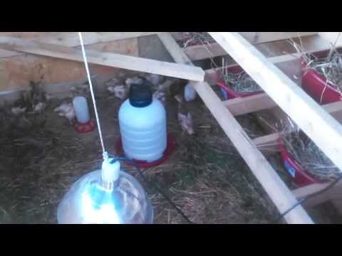 NEW DIY chicken coop and nesting boxes. Part 3
