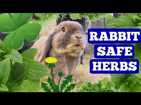 RABBIT SAFE HERBS!