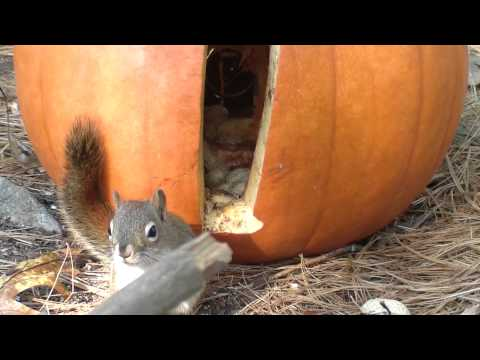 Chattering Squirrels (part 1)