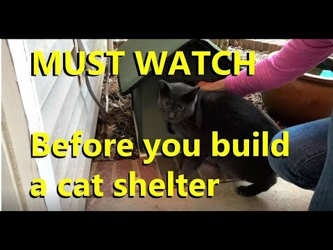 Building a feral cat shelter?  Watch this first!