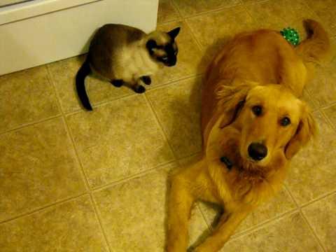 Friendly puppy/hateful cat