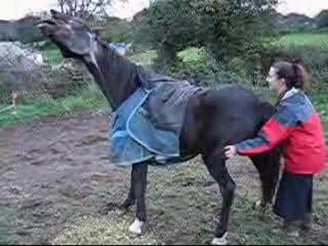 Xxx Mp4 Gay A Very Itchy Horse 3gp Sex
