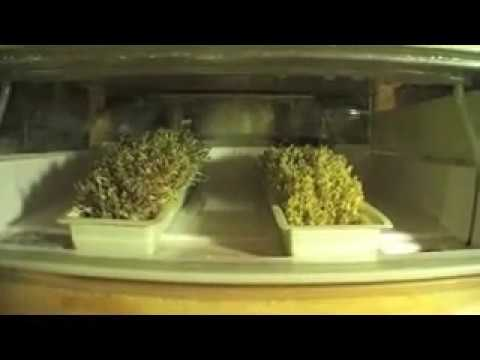 Easygreen Sprouter Tips and Tricks for Quick Easy Sprouting
