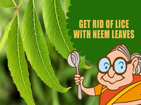 Lice & Nits - Ayurvedic Natural Home Remedies to Get Rid of Lice & Nits With Neem Leaves - Hair Care