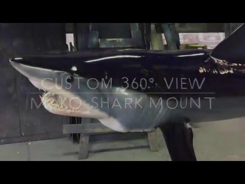 Mako Shark Custom Fishmount - Gray Taxidermy Fishmounts, Custom fish reproductions
