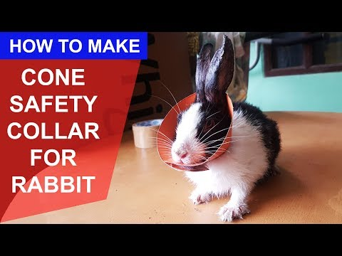 How To Make Safety Cone Collar For Rabbit bunny guinea pig