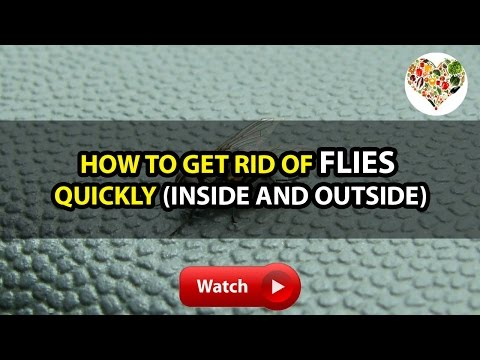 BH4U | How to Get Rid of Flies Quickly (Inside and Outside)