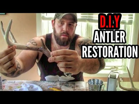 Shed Antler Restoration: Fixing Sun-Bleached, Chewed & Broken Tined Antlers