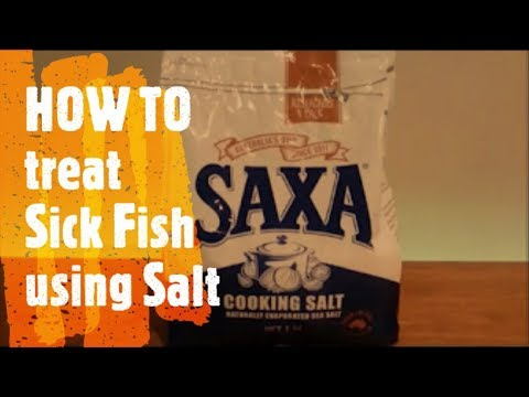 Treating Sick Fish with Salt.