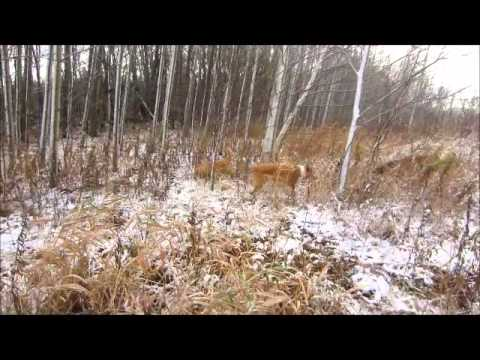 ~See Spot Run~off leash pack walks and dog boarding