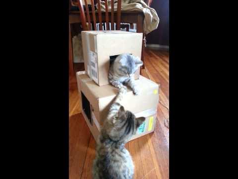 Easy homemade cat condo