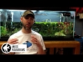 How to REMOVE NITRATES from your Aquarium. 3 steps to Balance Nitrate levels in your Aquarium