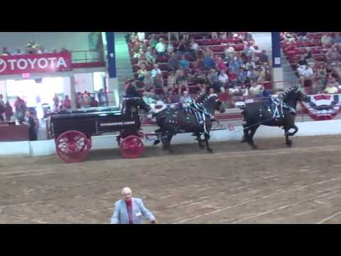 Four Horse Hitch at the 2012 New York State Fair