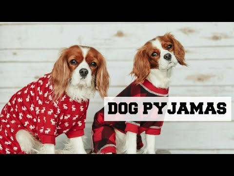 KEEP YOUR DOG WARM + FUR CONTROL FOR ALLERGIES | Unboxing Dog Pyjamas | Cavalier King Charles