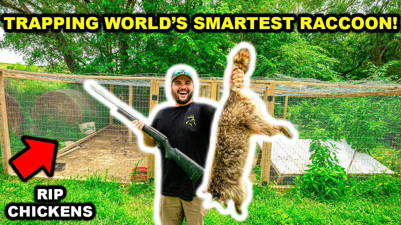 Trapping the WORLD'S SMARTEST RACCOON in My BACKYARD!!! (RIP Chickens)