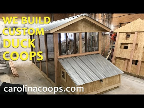 The Duck Coop - Carolina Coops