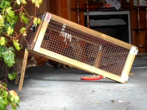 Box Trap Cat Rescue Christchurch Trapping stray cats x3