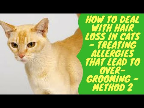 How to Deal with Hair Loss in Cats - Treating Allergies that Lead to Over Grooming - Method 2