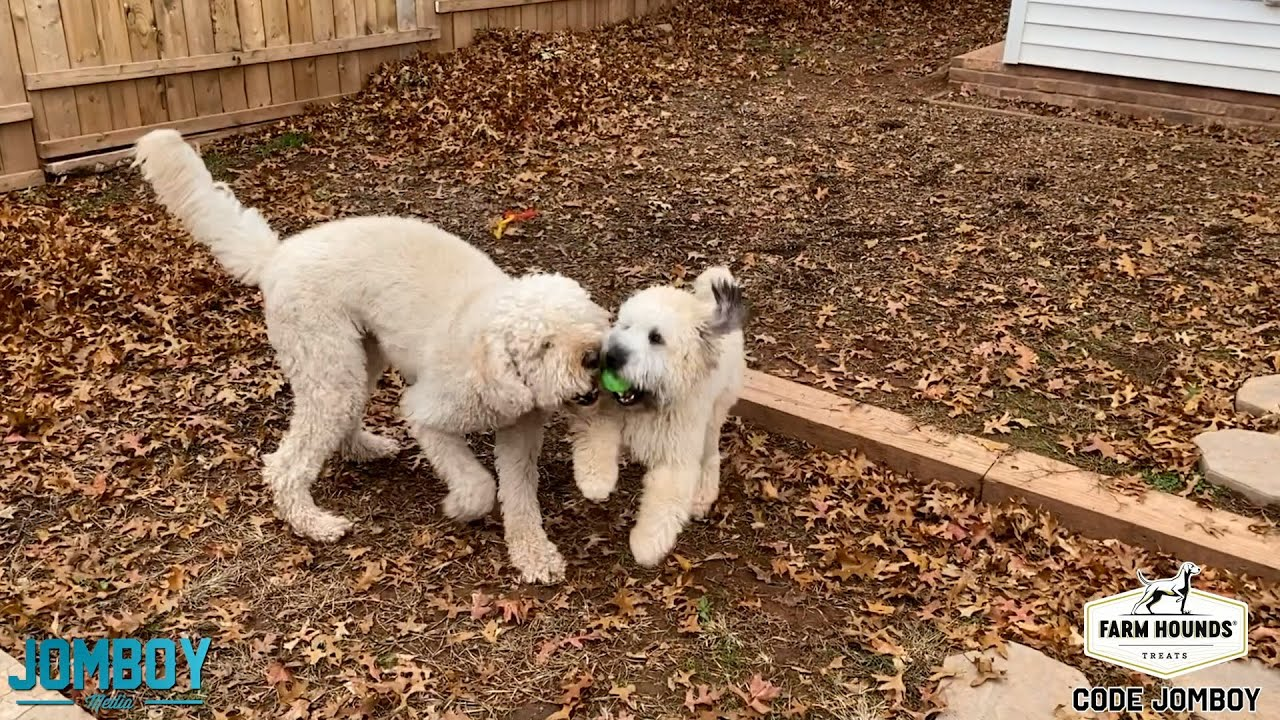 Dogs Play Fight Over a Ball, a breakdown