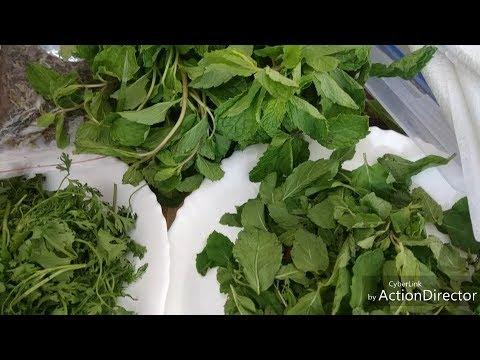 Dhaniya aur Pudina store kaise karein   kitchen tips