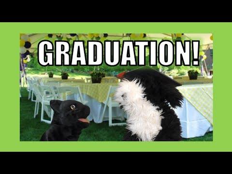 Graduation!  George the Self Esteem Cat