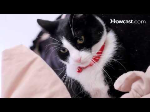 How to Avoid Cat Bites