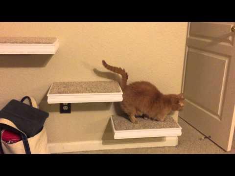 Cat Wall Steps Munchkin Style