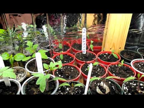 Quick Indoor Garden Update