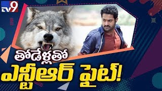 Jr.NTR will be seen in a Wolf Fight : RRR Intro Scene - TV9