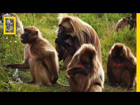 Xxx Mp4 An Educational Video About Monkey Sex National Geographic 3gp Sex