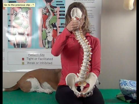 Scolio-Pilates: How to wedge a C-Curve Scoliosis