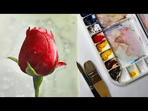How to Paint a Red Rose bud Watercolor flower painting