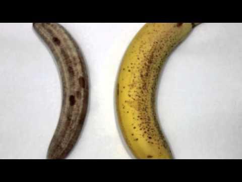 Xxx Mp4 Quot Banana Quot Safe Sex PSA 3gp Sex