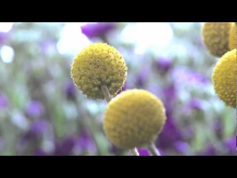 The Language of Flowers by Vanessa Diffenbaugh Book Trailer