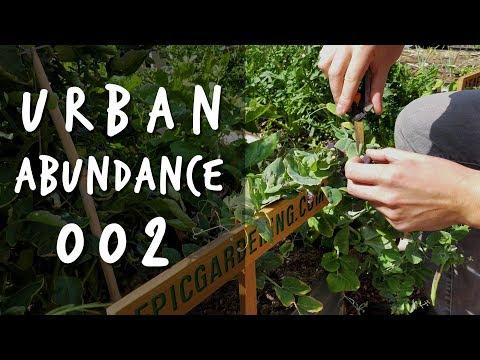 Front Yard Garden Update | Urban Abundance 002