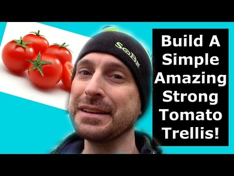 How To Build An Amazing Tomato Trellis For BIG production!